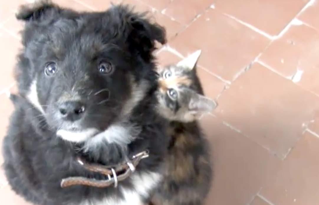 «Он не давался в руки и настойчиво звал нас за собой!». В Омске щенок спас двух маленьких замерзающих котят фото
