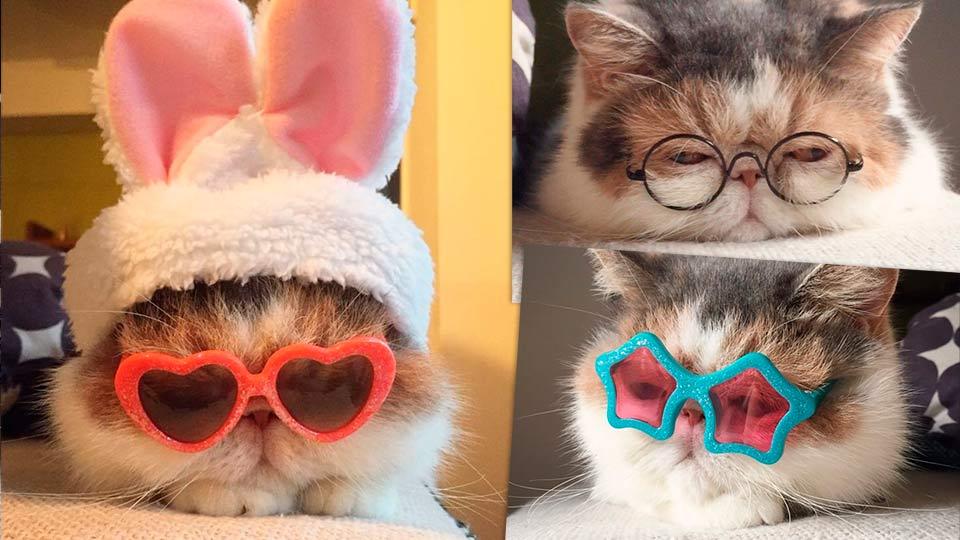 Буона – кошка из Японии, очаровавшая Инстаграм фото