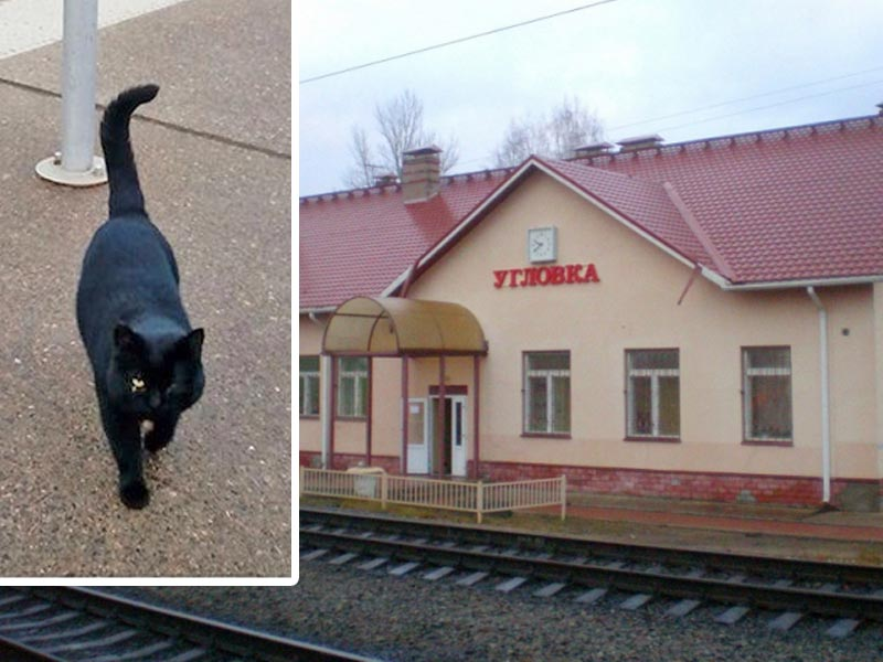 Кот Борис стал «Станционным смотрителем» Угловки фото