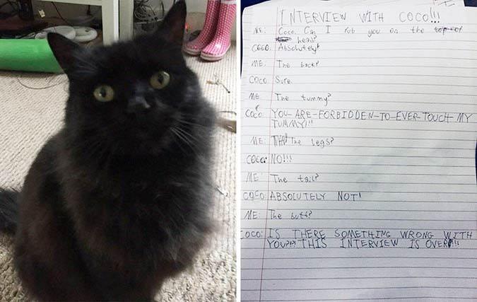 Девочка взяла интервью у своей кошки. Та осталась недовольна разговором фото