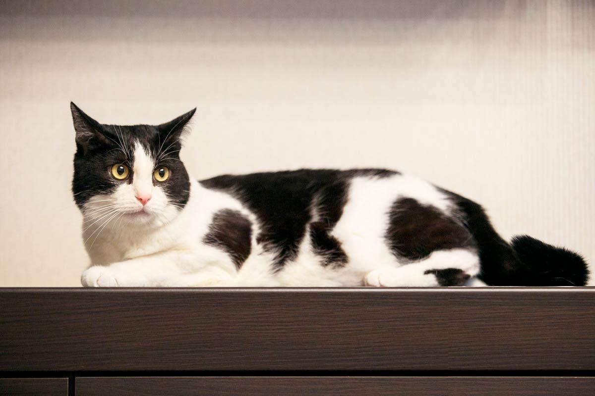 Самый популярный белорусский кот: как Пусик из-под Минска стал звездой YouTube фото