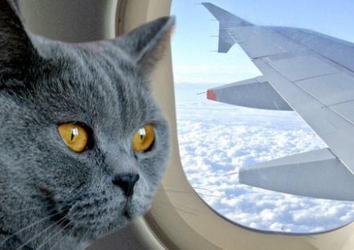 В Пакистане задержали рейс из-за пробравшейся в кабину самолёта кошки фото