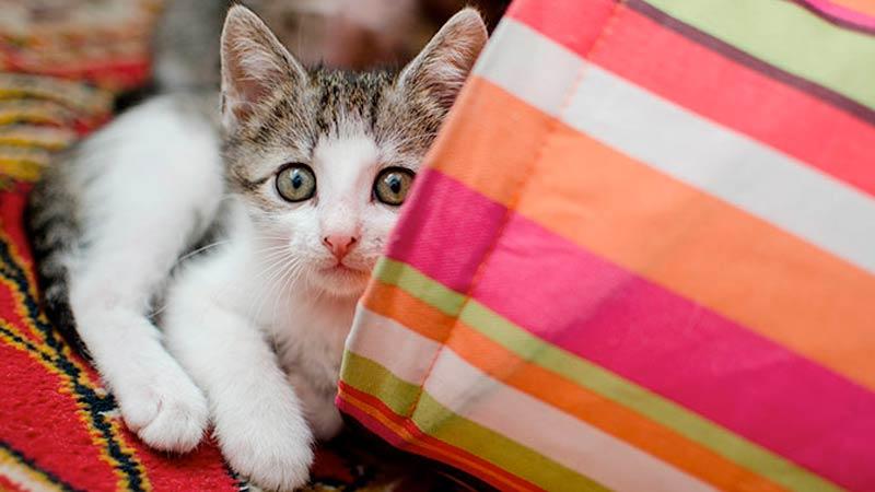 В одной из квартир во Владимире прорвало трубу отопления и кошки заживо сварились в кипятке фото