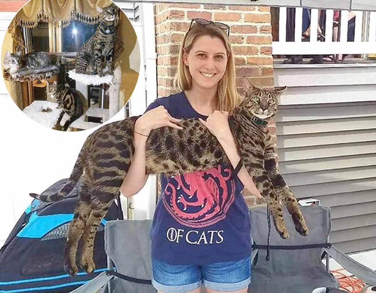 За возвращение пропавших кошек предлагают вознаграждение в 100 000 долларов фото