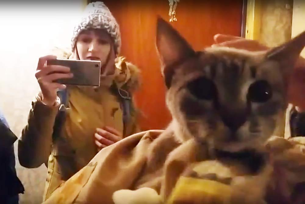 В Йошкар-Оле спасли кошку, просидевшую в вентиляции неделю фото