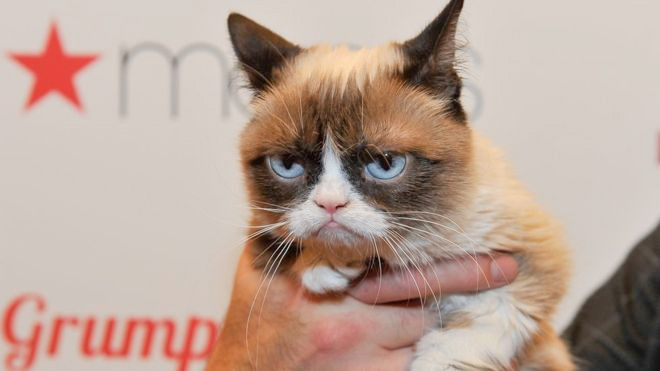 Хмурая кошка Грампи Кэт отсудила 700000 долларов за нарушение авторских прав фото