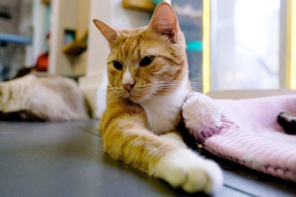 Кот из Эрмитажа покорил петербургскую музыкальную сцену фото