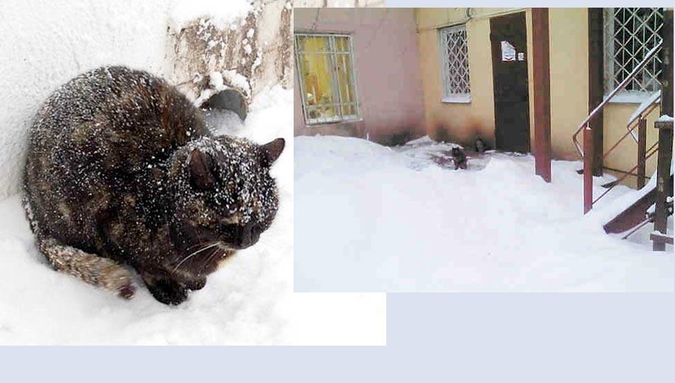 Мурлыкам здесь не место: за что прогнали кошек из психбольницы фото