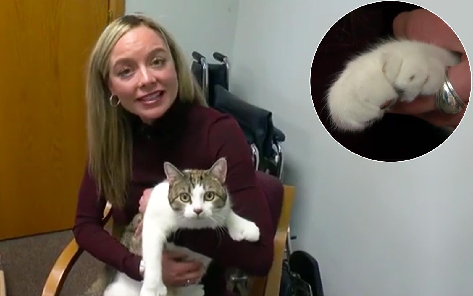 У кошки из Миннесоты аномальное число пальцев фото