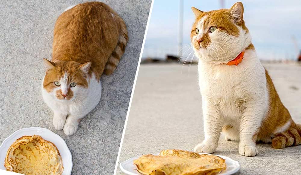 Крымский Кот Мостик после Масленицы сел на креветочную диету фото