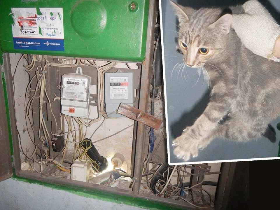 8 часов работы – и весь подъезд без света! Всё это ради спасения кота-хулигана, застрявшего в электрическом щитке фото
