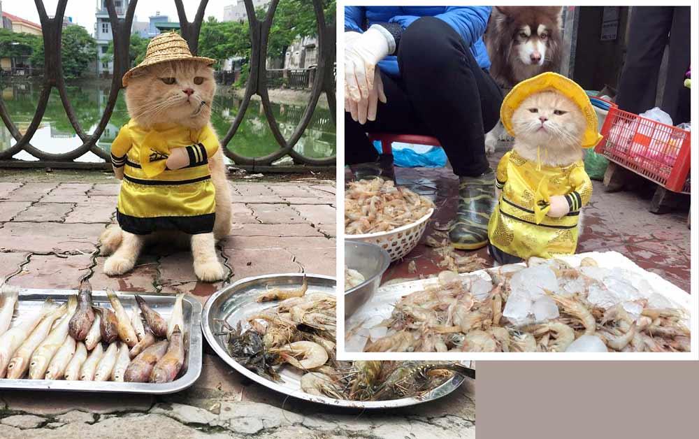 Во Вьетнаме кот стал продавцом на местном рыбном рынке фото