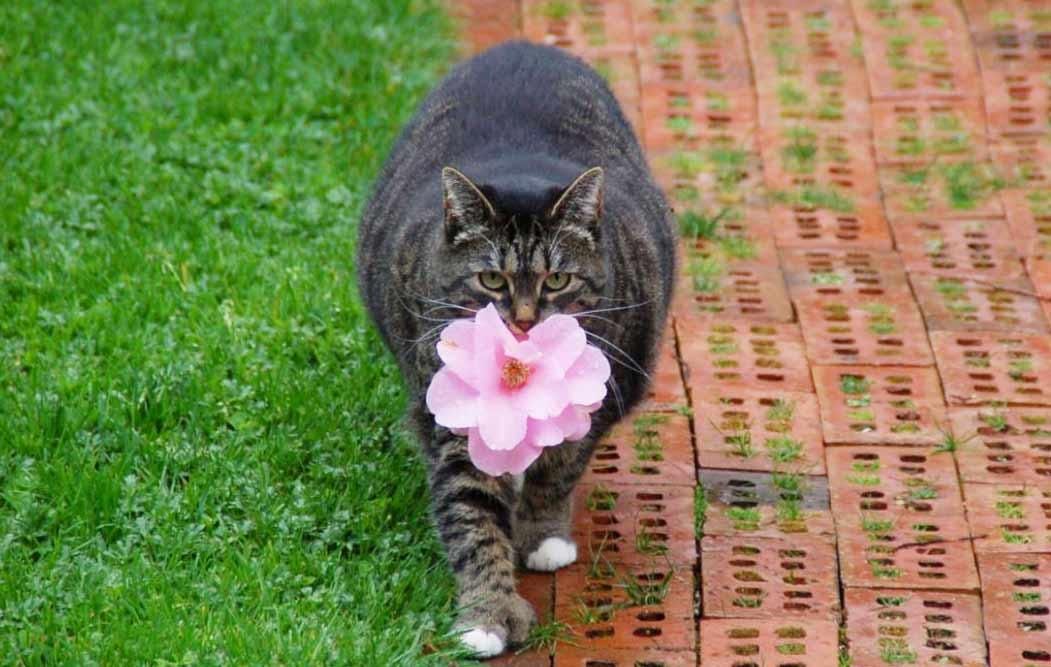 В Канаде кошка научилась дарить цветы своей хозяйке фото