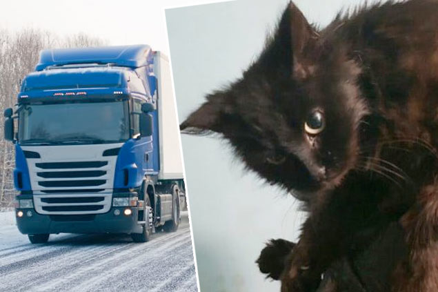 Кошка десять дней ехала в фуре из Москвы в Благовещенск без еды и воды фото