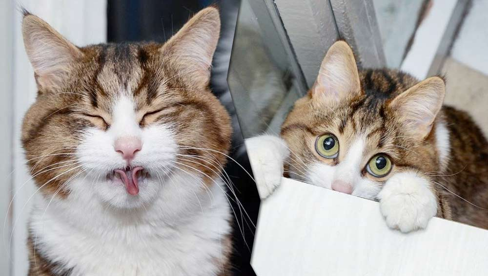 Строящий рожи кот из России стал звездой Instagram фото