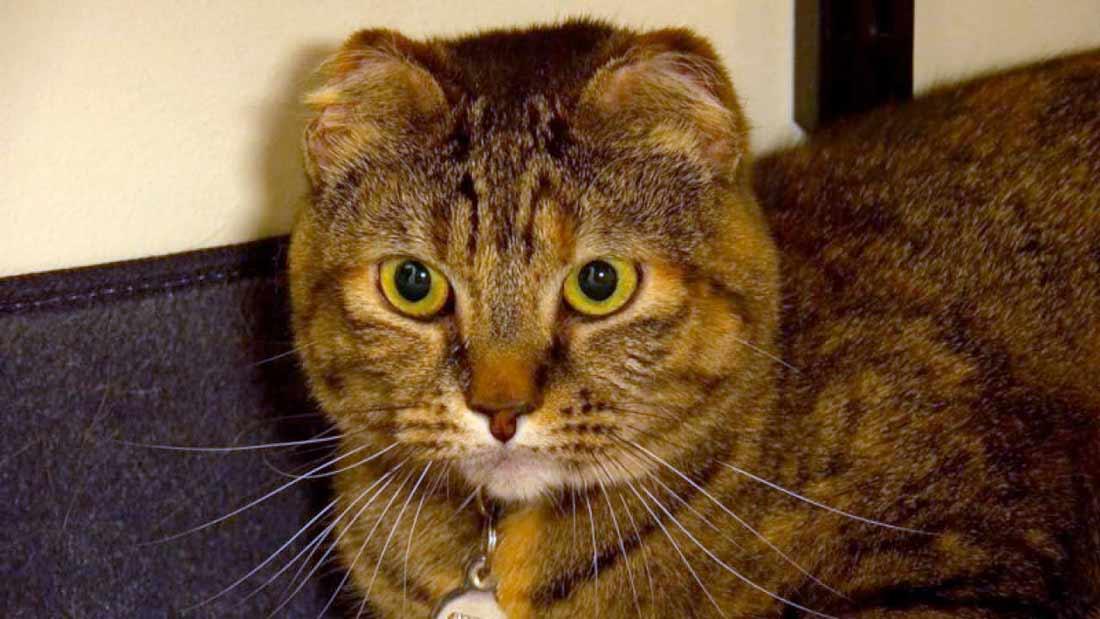 Из-за морозов кошка потеряла уши, хвост и задние лапы, но смогла выжить фото