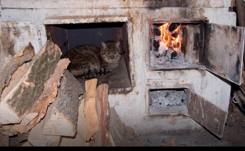 В Марий Эл женщина заживо сожгла кошку в печи фото