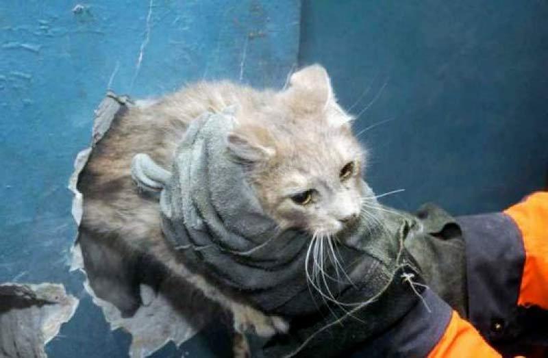 В Казани спасли кошку, четыре дня сидевшую в вентиляционной трубе фото