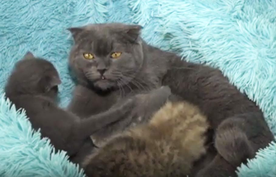 Кошка из приморского зоопаркае выкормила и воспитывает рысенка фото