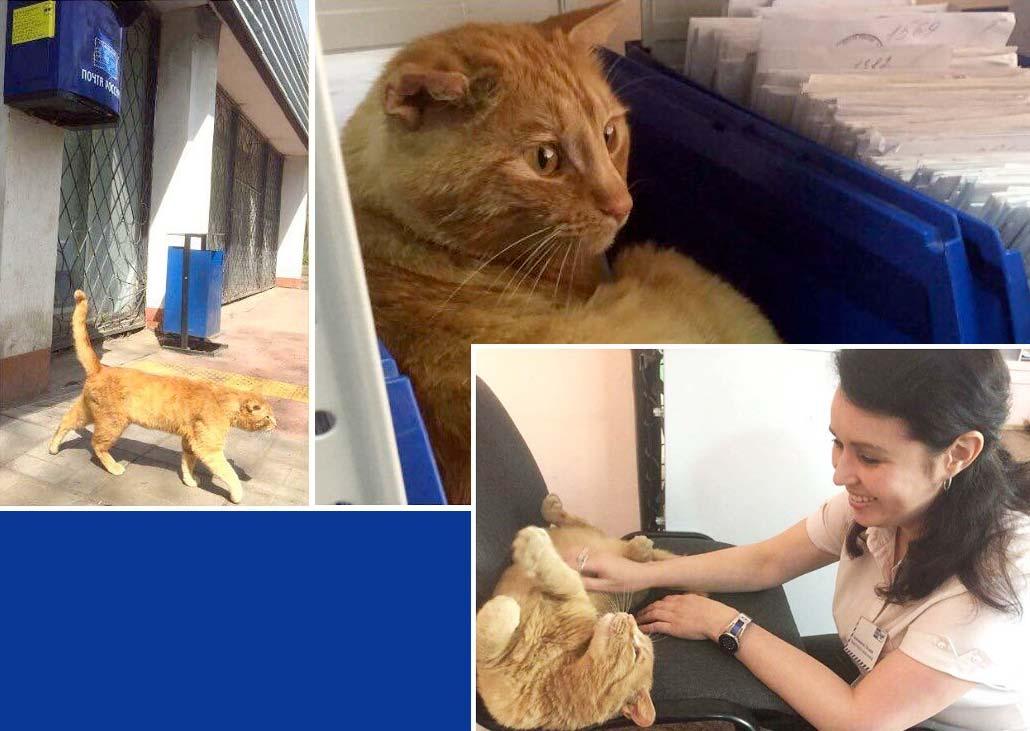 В Омске на почте работает кот по кличке «Рыжий» фото