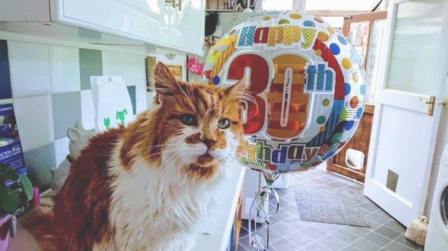 Самый старый кот в мире отметил юбилей 30 лет фото