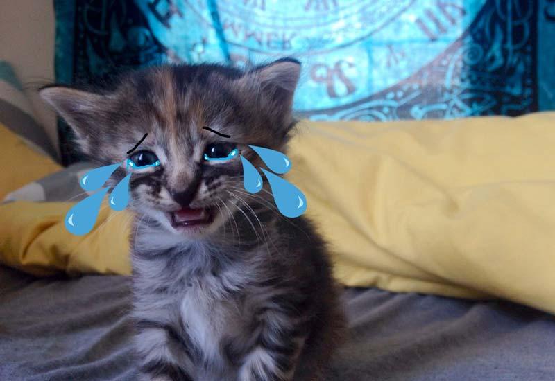 В Астрахани ради спасения кошки сломали стену дома фото