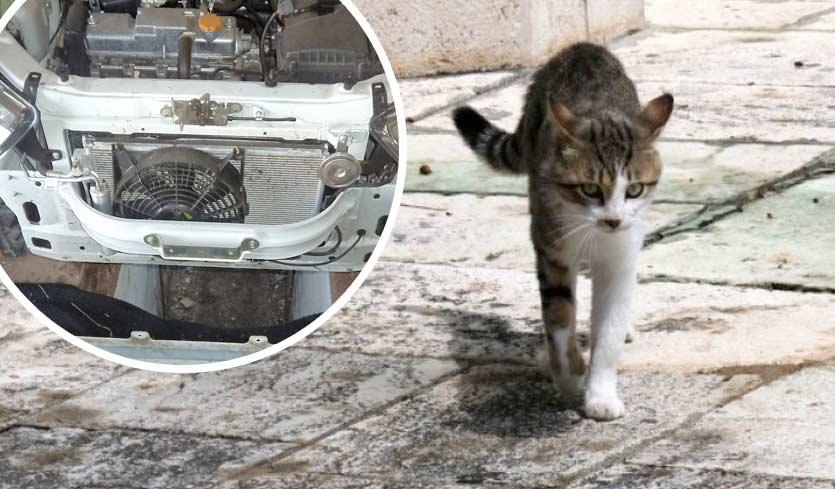 В Великобритании кот проехал за решеткой радиатора 120 километров фото