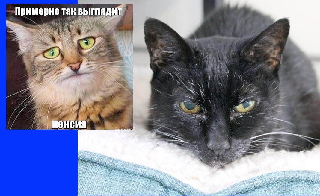 Слепая кошка-работяга вышла на пенсию фото