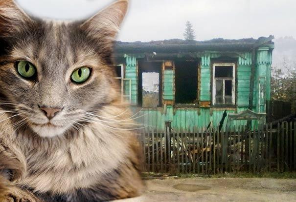В уральском посёлке Совхозном кошка спасла хозяина от гибели в огне фото
