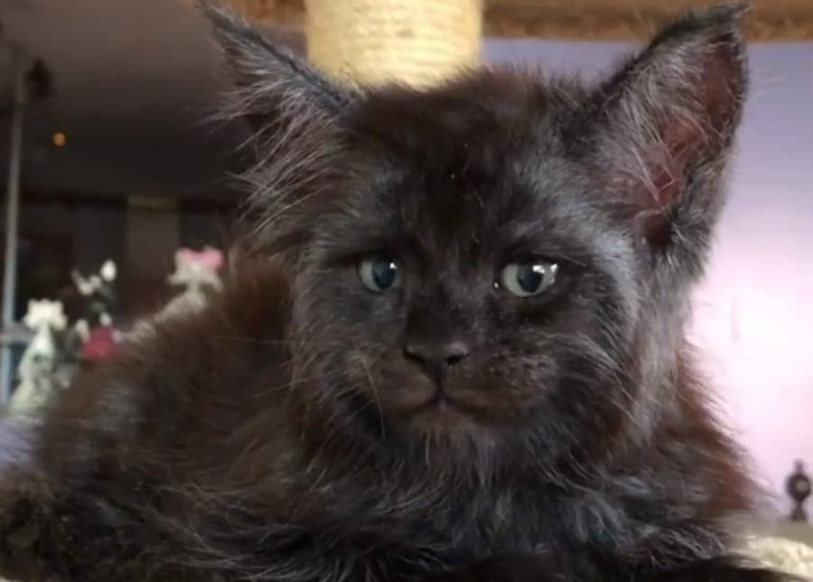 Кот с человеческим лицом шокировал пользователей сети фото