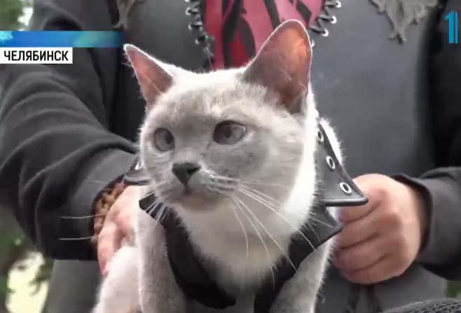 Кошка-байкер проехала 40 тысяч километров фото