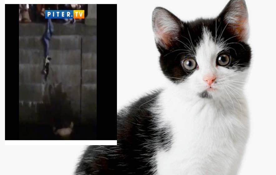 Петербуржец прыгнул в реку Мойку ради спасения кошки фото