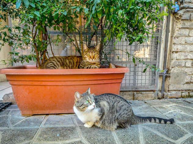 Итальянские кошки смогут позволить жить в пятизвездочном отеле фото