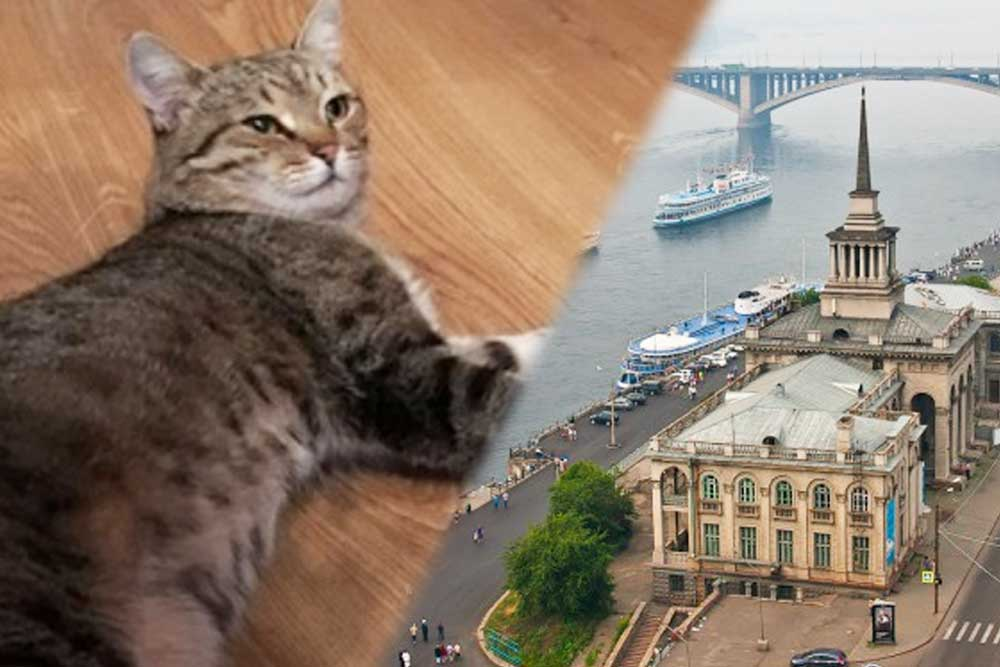 В Красноярске кот вернулся домой спустя семь лет скитаний фото