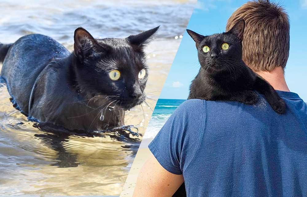 Кошка-пловец из Австралии прославилась на всю страну и стала звездой соцсетей фото