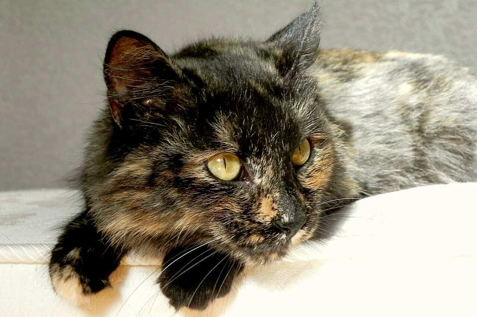 Кошка Соня неделю жила под балконом дома в надежде, что хозяева за ней вернутся фото