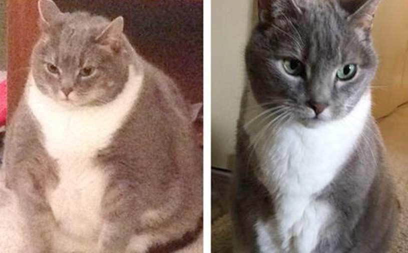 Очень толстый кот похудел и стал похож на атлета фото