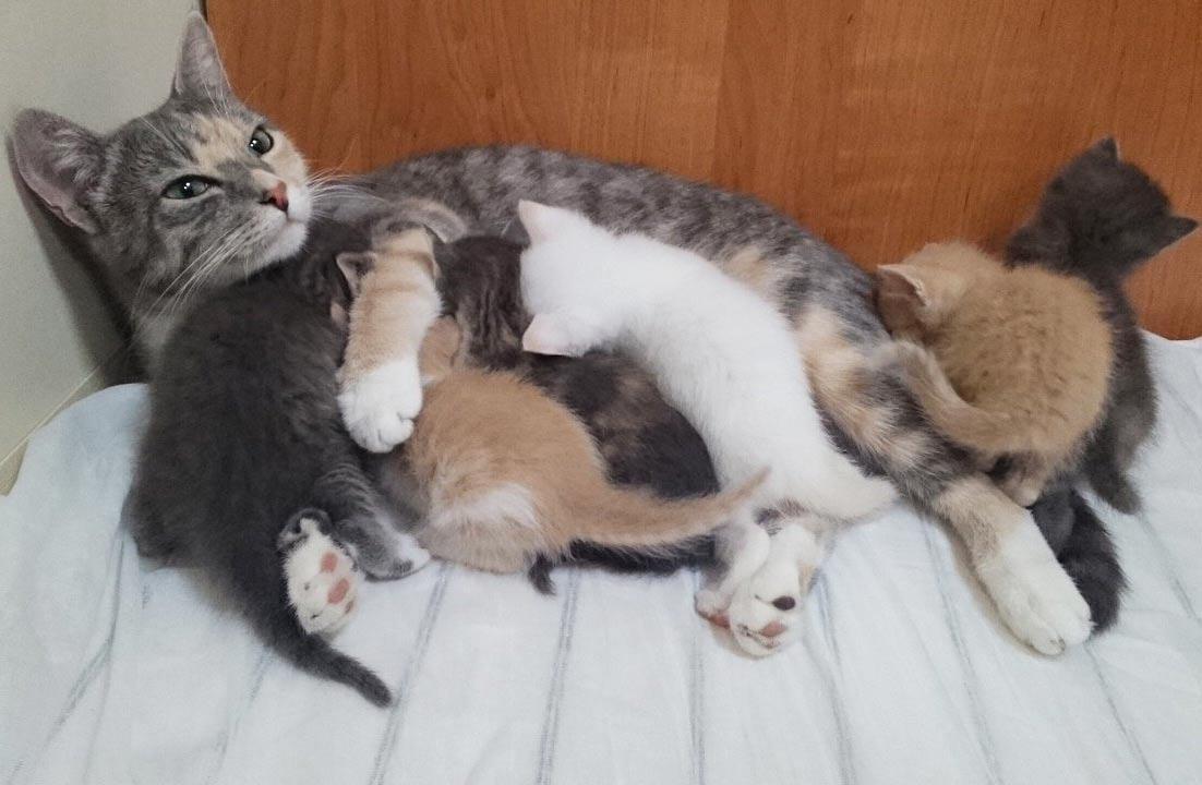 Кошка родила котят на глубине 200 метров фото
