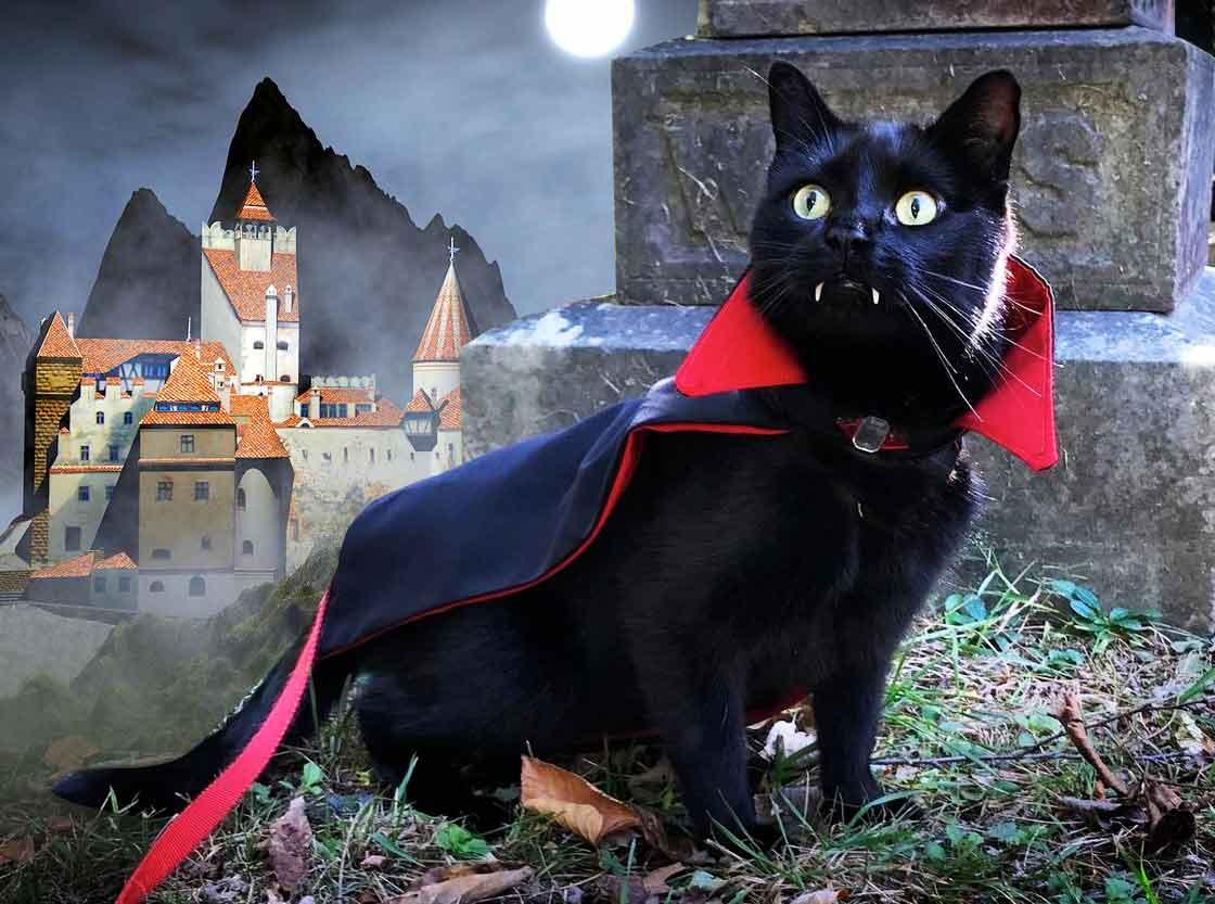 Кот-вампир граф Мяукала стал звездой соцсетей фото