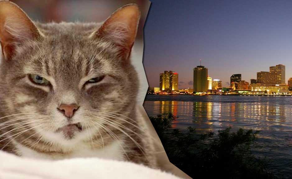В США кошка оставила без света целый город фото