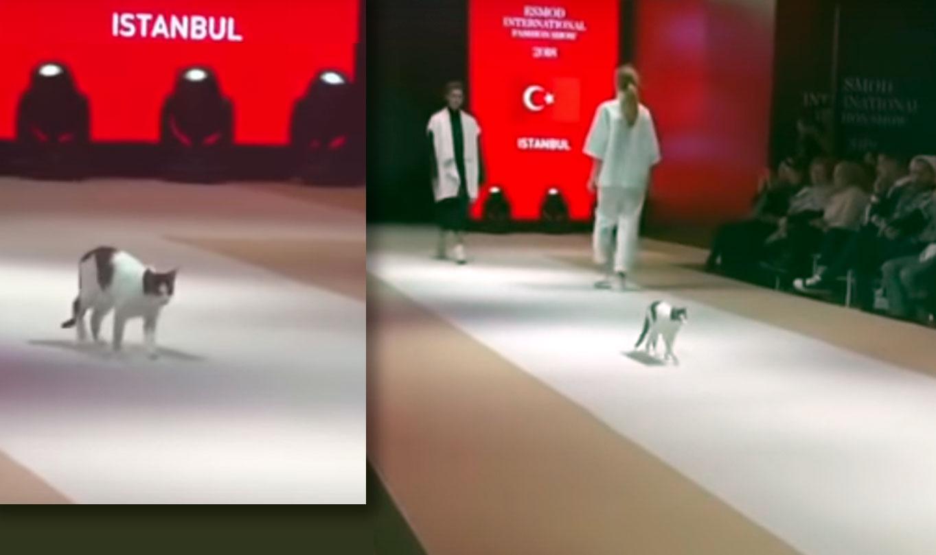 В Турции кошка прошла по подиуму вместе с моделями фото