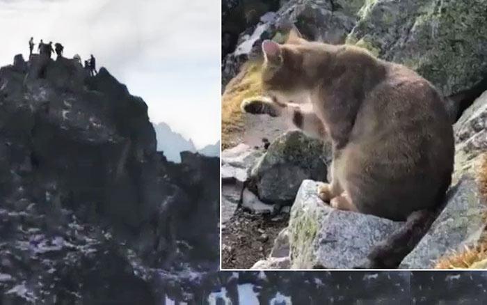 Альпинист, взойдя на самую высокую точку Польши, обнаружил там мирно умывающегося домашнего кота фото