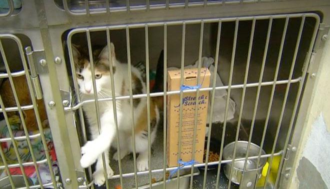 «Они не могли дышать»: в багажнике был найден контейнер, а в нем — 17 кошек фото