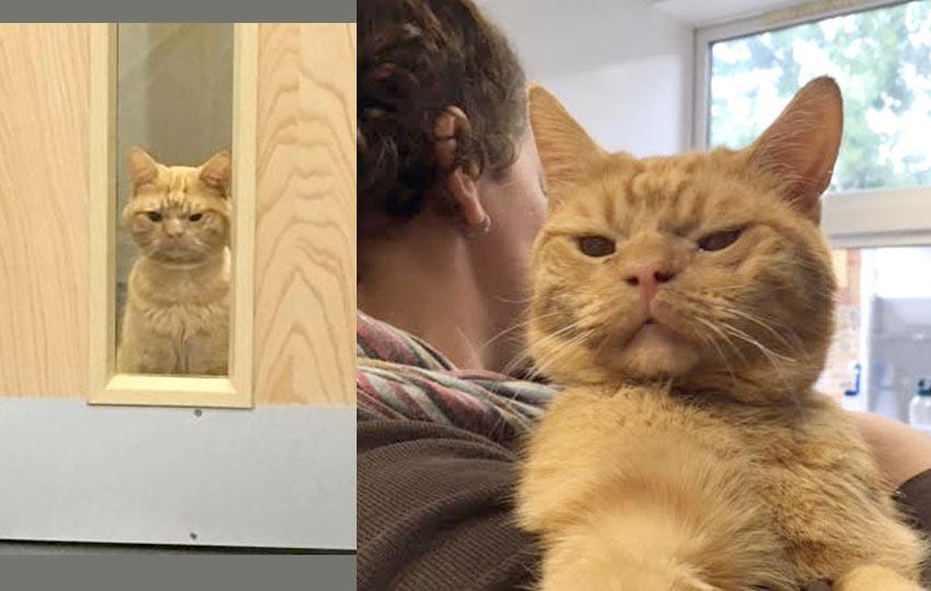 Недовольный рыжий кот стал новым мемом фото