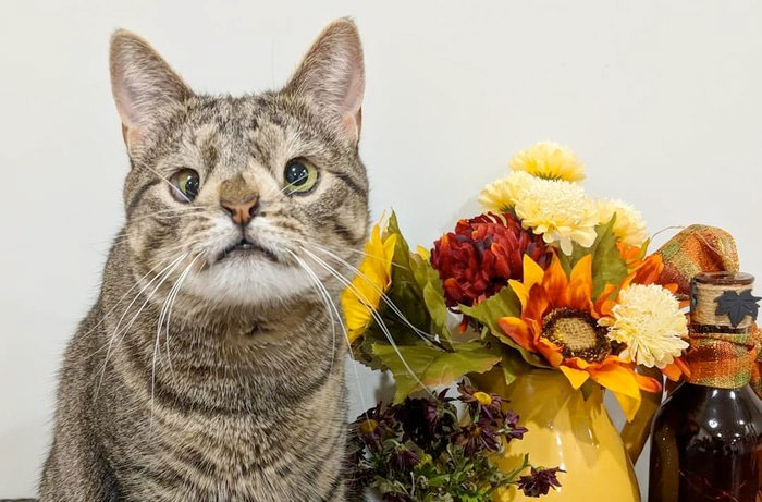 Кошка с лишней хромосомой, которую выбросили на улицу, прославилась в сети фото
