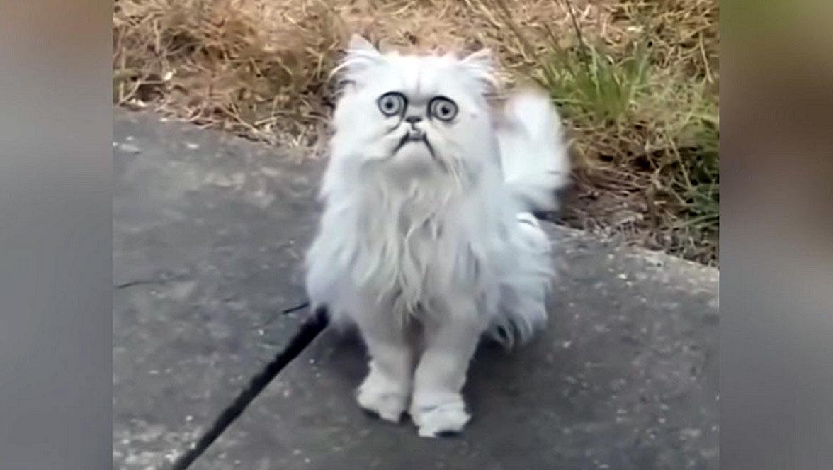 Найден самый страшный кот, взгляд которого вселяет ужас фото