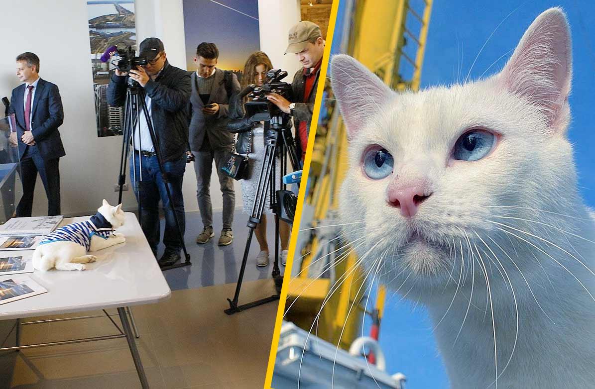Специальную награду за вклад в развитие туризма получил кот из Эрмитажа фото