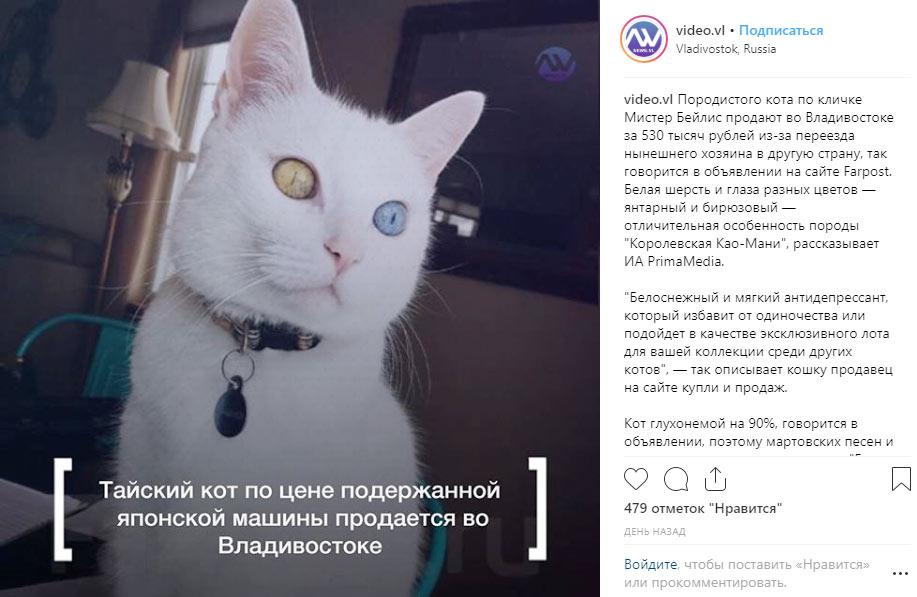 Кота с разноцветными глазами выставили на продажу за полмиллиона рублей фото