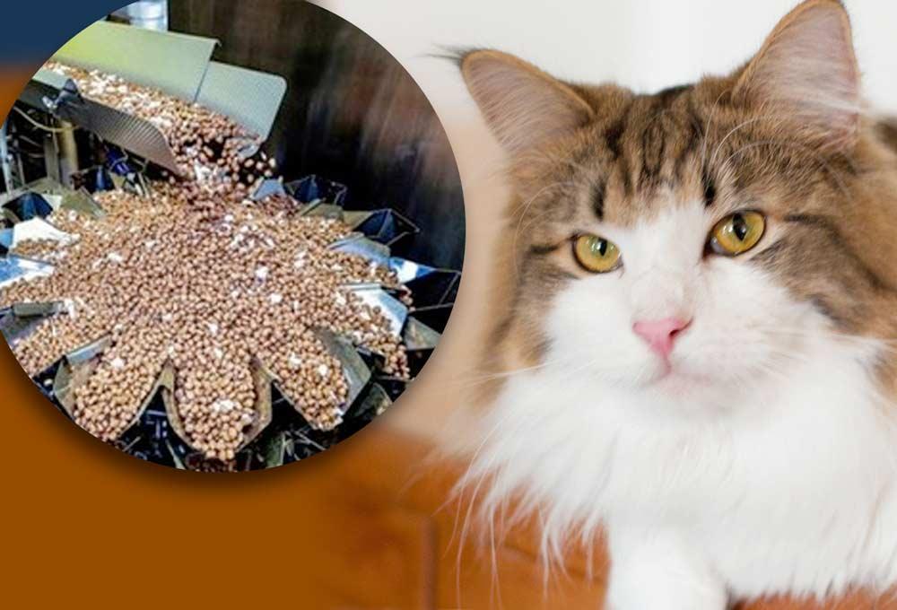 Кот сбежал из дома и целый год жил на фабрике кормов для животных фото
