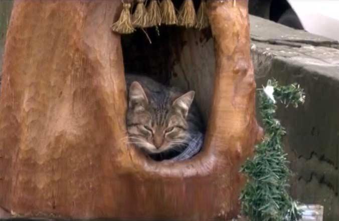 В Анапе местный житель вырезал из старого пня домик для бездомной кошки фото